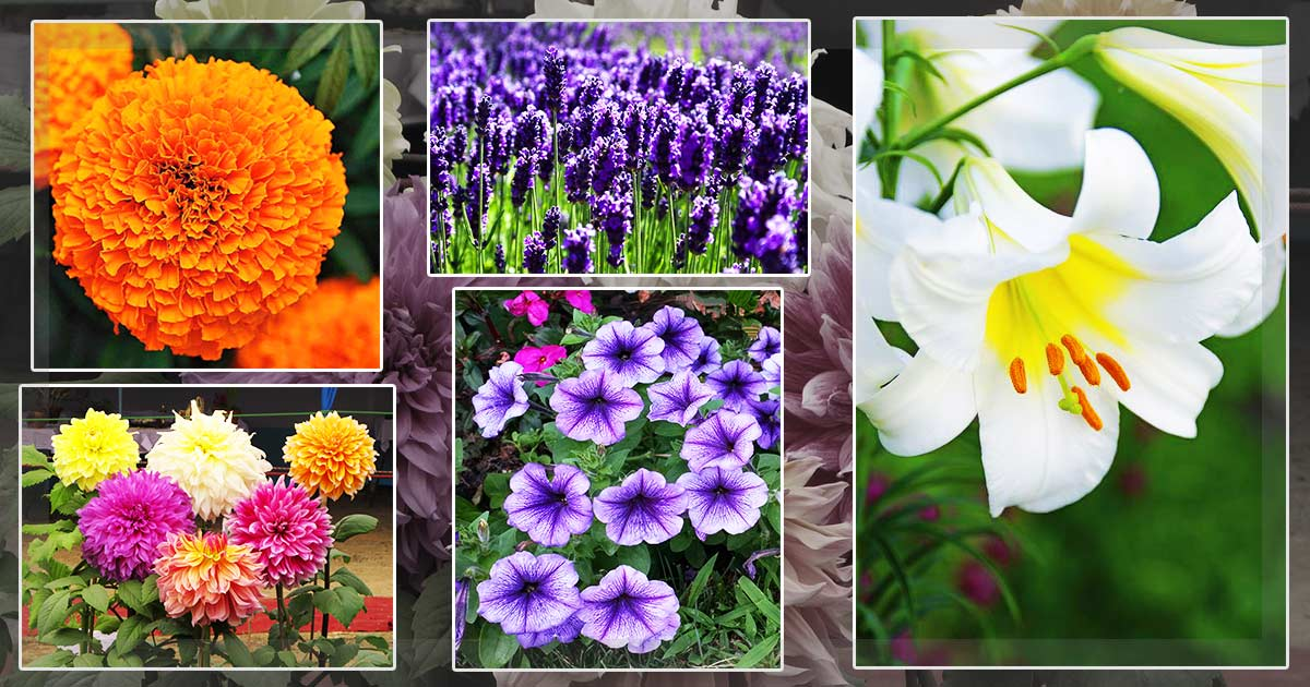 http://meranews.in/backend/main_imgs/flower_five-flowers-one-should-grow-this-summer_0.jpg