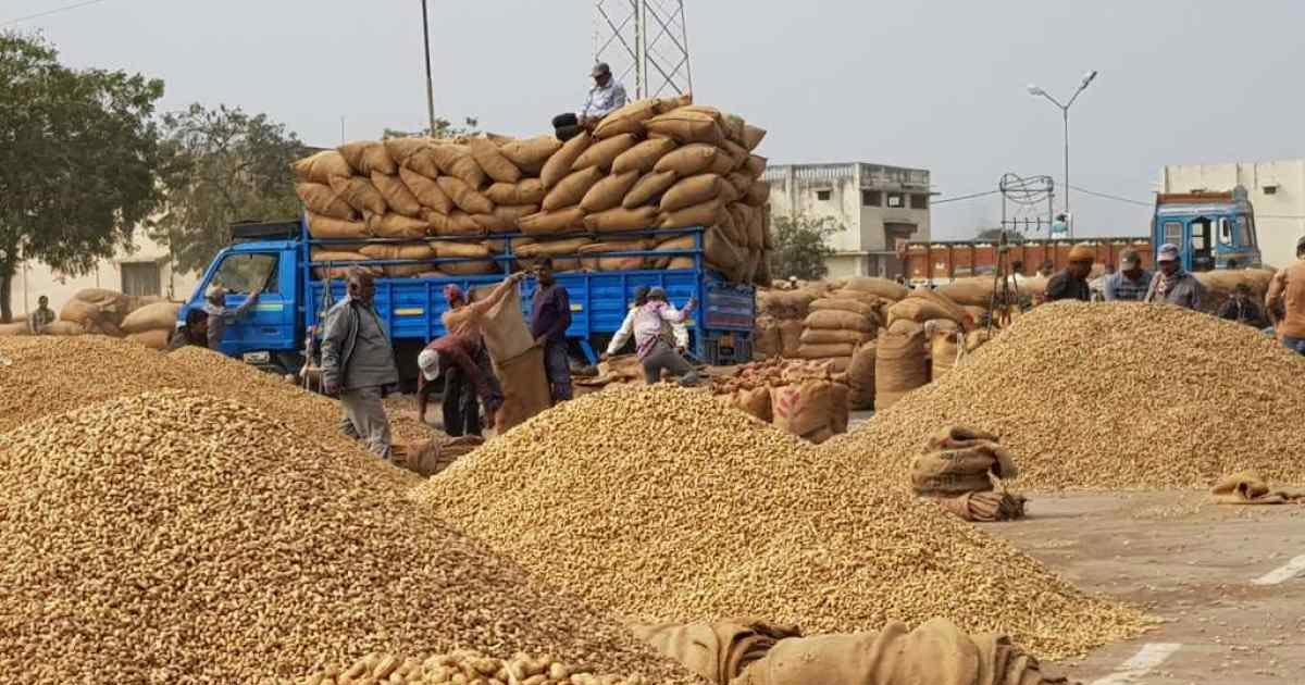 http://meranews.in/backend/main_imgs/groundnut_groundnut-crop-msp-saurashtra-farmers-open-market-sell-low-prices_0.jpg